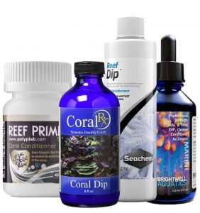 How and How Long Acclimate Corals - dip solutions