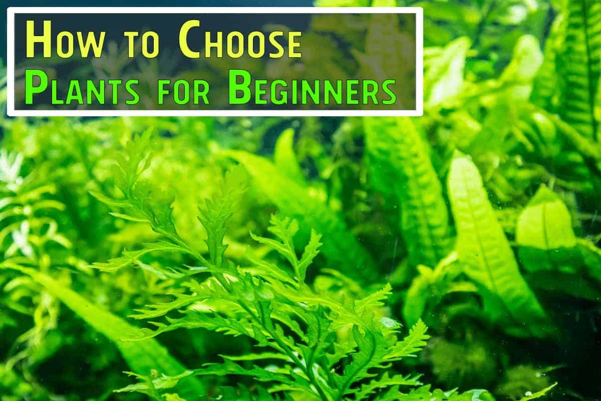 How to Choose Aquarium Plants for Beginners. Examples